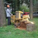 Certificate in Stump Grinding